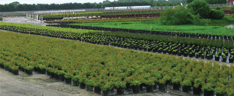 Medford Nursery New Jersey Whole Grower