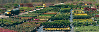 Nursery Stock Perennials Gres Hard To Find